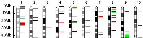 Slice of a Genome View